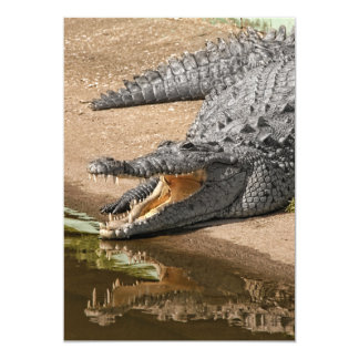Gator Portrait  with Mouth Wide Open 13 Cm X 18 Cm Invitation Card