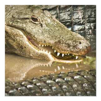 Gator Showing Teeth in Reflections 13 Cm X 13 Cm Square Invitation Card