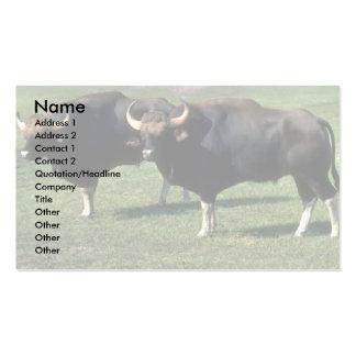 Gaur-adult bulls pack of standard business cards