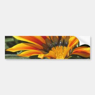 Gazania Bloom Bumper Stickers
