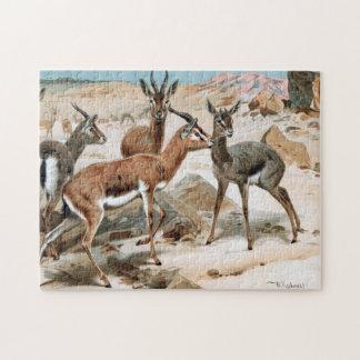 Gazelle Puzzles