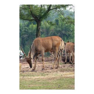 Gazelle, wild animal zoo,羚. custom flyer