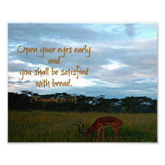Gazelle with Proverbs Bible verse Open your eyes Photograph
