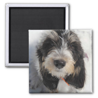 GBGV Puppy Magnet
