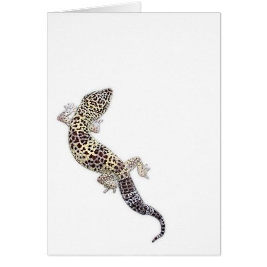 Gecko Card 01