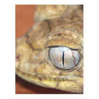 Gecko Eye Postcard