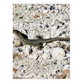 Gecko Lizard Postcard