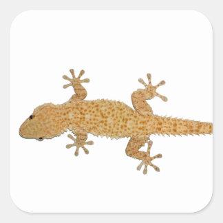 gecko lizard square sticker