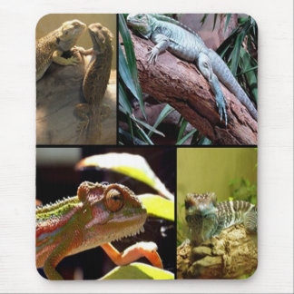 Gecko lizards and Chameleons Mouse Mat