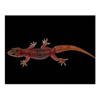 Gecko Postcard