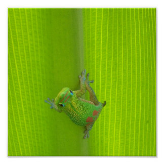 Gecko Print