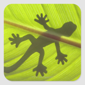 Gecko Square Sticker