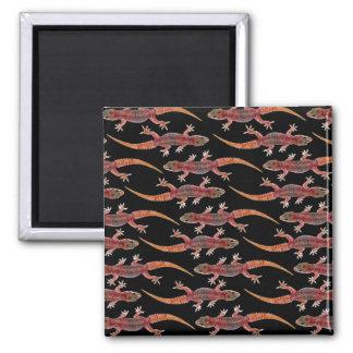 Geckos Square Magnet