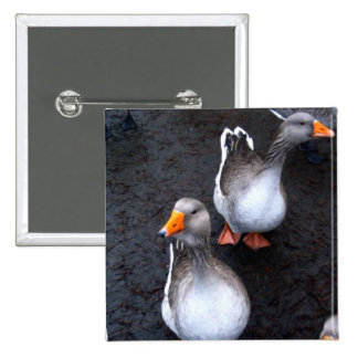 Geese 15 Cm Square Badge