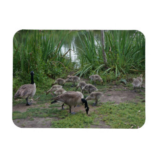 Geese and Goslings Photo Magnet