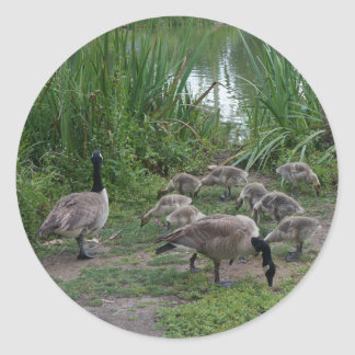 Geese and Goslings Stickers