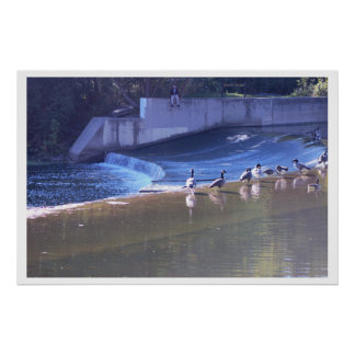 Geese by Waterfall Photo Poster