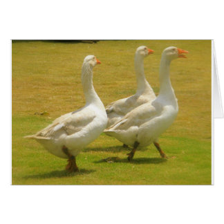 geese card