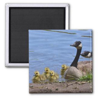 Geese & Gosslings Magnet
