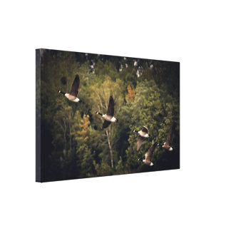 "Geese in Flight 14"" x 11"", 1.5"", Single Canvas Print"