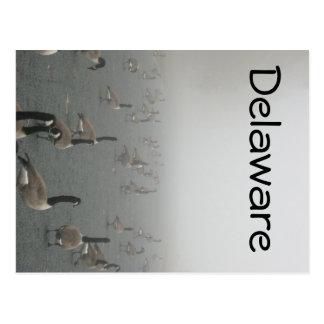Geese in Fog Postcard