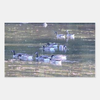 Geese Photo Rectangular Sticker