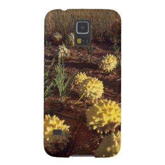 Gemsbok Cucumber (Acanthosicyos Naudinaris) Case For Galaxy S5