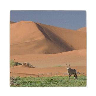 Gemsbok (Oryx Gazella) Near Sand Dunes Wood Coaster