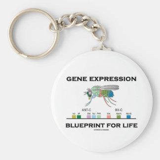 Gene Expression Blueprint For Life Homeobox Genes Key Chains