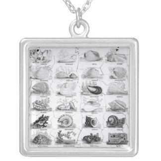Genera of Shells jigsaw, pub. by W. Edwards Silver Plated Necklace