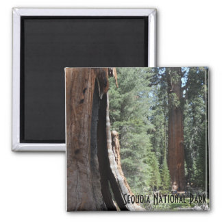 General Sherman Tree- Sequoia National Park Square Magnet