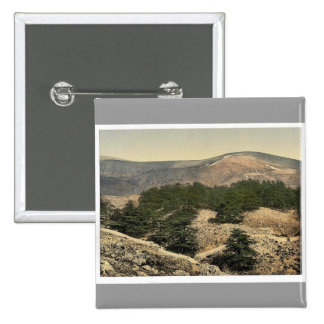 General view of the cedars of Lebanon, Lebanon, Ho Button