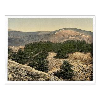 General view of the cedars of Lebanon, Lebanon, Ho Postcard