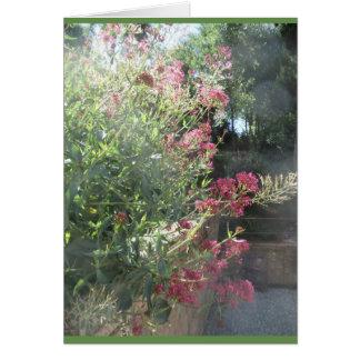 Generalife Garden, Spain Card
