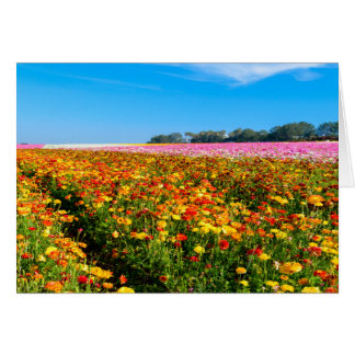 Generic Greating Card Flower Fields