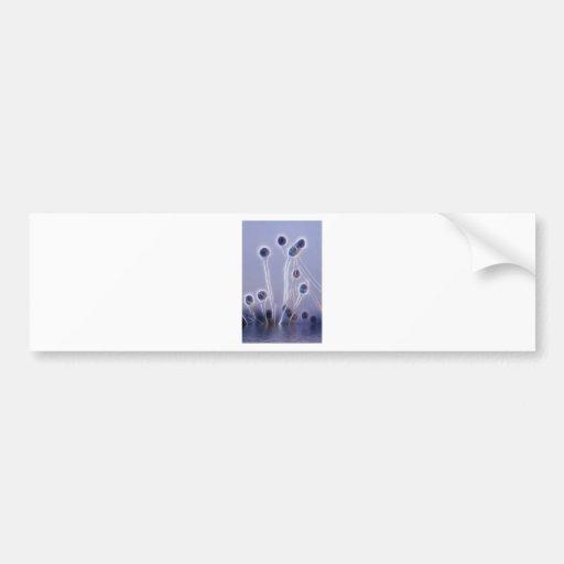 Genes Reunited digital art Bumper Sticker