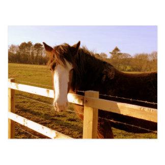 Gentle Horse White Blaze Postcard