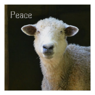 Gentle Sheep Poster