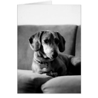 Gentleman Daschund Greeting Card
