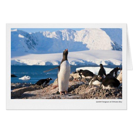 Gentoo Penguin at Dorian Bay