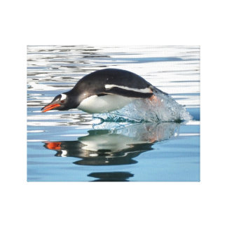 Gentoo Penguin Diving Stretched Canvas Print