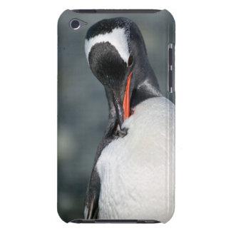 Gentoo Penguin in Neko Harbor Antarctica Barely There iPod Covers