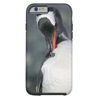 Gentoo Penguin in Neko Harbor Antarctica Tough iPhone 6 Case