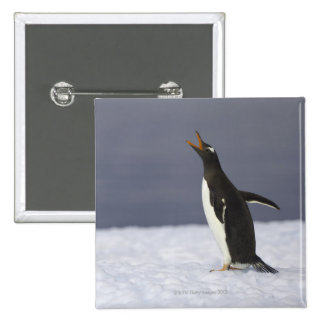 Gentoo penguin (Pygoscelis papua) adult bird 15 Cm Square Badge