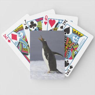 Gentoo penguin (Pygoscelis papua) adult bird Bicycle Playing Cards