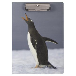 Gentoo penguin (Pygoscelis papua) adult bird Clipboard