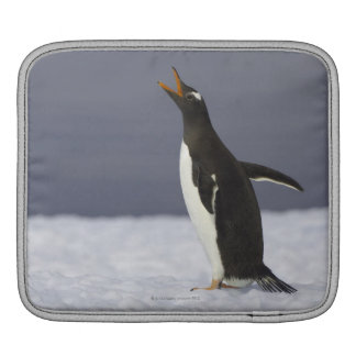 Gentoo penguin (Pygoscelis papua) adult bird iPad Sleeve