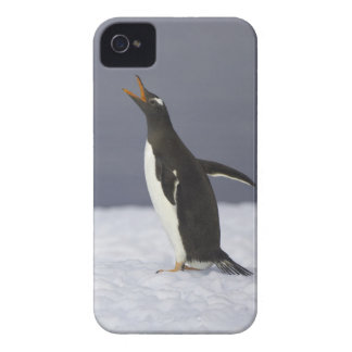 Gentoo penguin (Pygoscelis papua) adult bird iPhone 4 Case