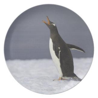 Gentoo penguin (Pygoscelis papua) adult bird Plate