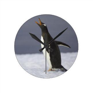 Gentoo penguin (Pygoscelis papua) adult bird Round Clock
